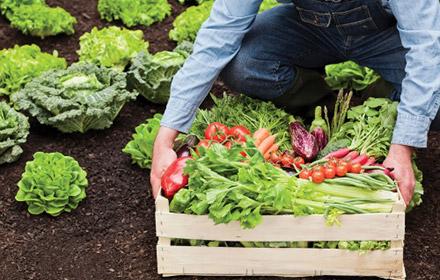 ogorod - Заря микробиоэффект купить бокаши, эмочки, защита растений, удобрения