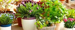 zarya org ua zemledelie 01 - Эффективные микроорганизмы для ухода за цветами