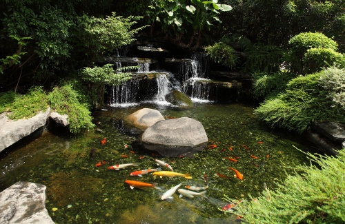 backyard garden pond - Бокаши купить