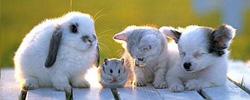 zarya org ua jivotnye 02 - Бокаши для домашних питомцев (кошек, собак, хомяков и др)