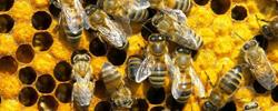 zarya org ua jivotnye 07 - ЭМ препараты в пчеловодстве