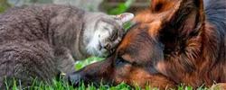 zarya org ua jivotnye 12 - Домашние питомцы кошки, собаки и др