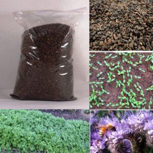 Семена ФАЦЕЛИЯ удобрение сидерат