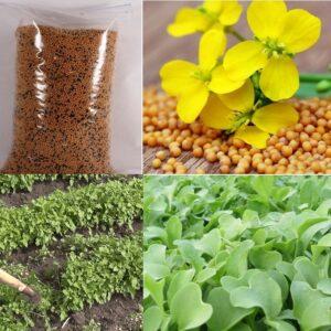 Семена ГОРЧИЦА удобрение сидерат