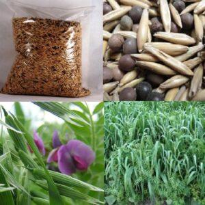 Семена ВИКО-ОВСЯНАЯ СМЕСЬ удобрение сидерат