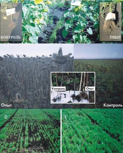 agrozin 2 - АГРОЗИН – заменитель гербицида, который улучшает структуру почвы