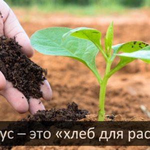 Биогумус +380983161648