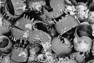 diatomit debuzzer 4 300x203 - ДИАТОМИТ ДЕБУЗЕР био-инсектицид для растений и животных + восстановитель почвы
