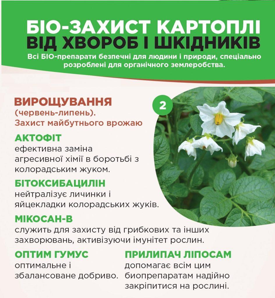 2 etap 944x1024 - БИО-защита КАРТОФЕЛЯ от болезней и вредителей