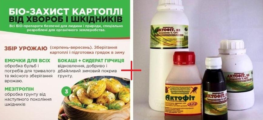 3 этап выращивания картофеля