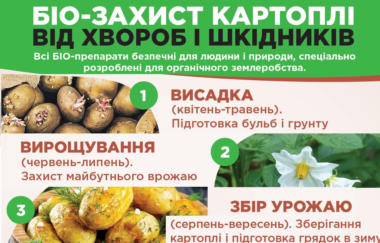 статья Защита картофеля