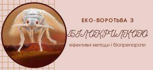 belokrylka zaglavnaya 300x137 - ТРИХОДЕРМА биофунгицид